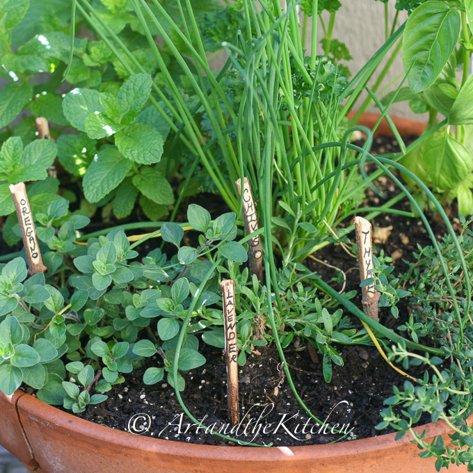 grow your own herb garden art and the kitchen